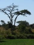 Africa 2011 126
