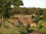 Africa 2011 521
