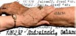 Holocaust Tattoo II