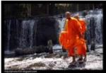 metta refuge dharma nuggets