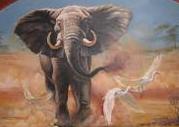 elephant II