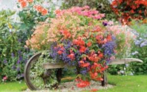 garden IV