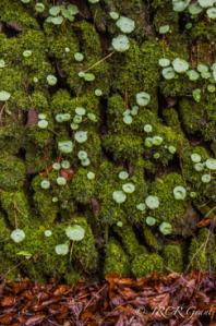 Green Wall          Copper Carpet