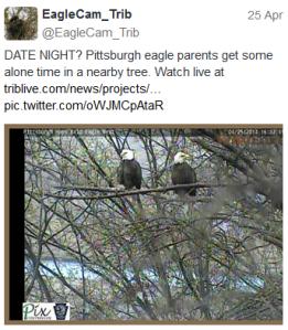 pittsburgh eaglets IV