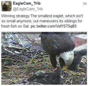 pittsburgh eaglets V