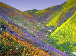 valley of flowers india