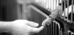 kindness VIII