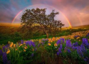 rainbow III