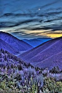 Purple Idaho