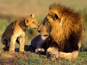 lions I