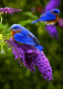 bluebird I