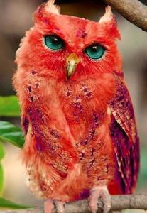 owl-iii
